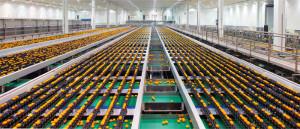 Paramount Citrus packing facility